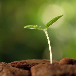 Третиране на семена